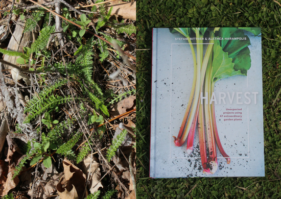 Foraging for Yarrow & Harvest Book Review