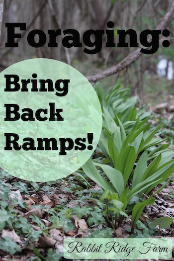 Foraging: Bring Back Ramps!