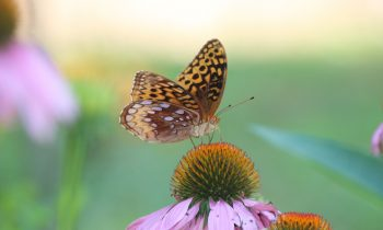 15 Perennials to Plant for Pollinators